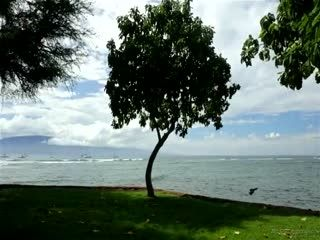 Cindy Starfall And Aaliyah Love Aaliyahs Hawaiian Vacation